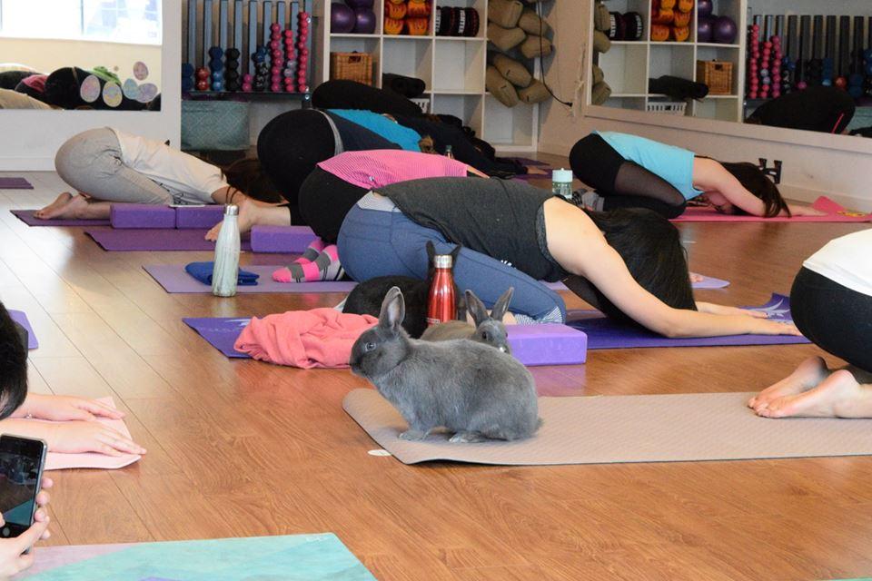 yoga-conejos-ejercicios