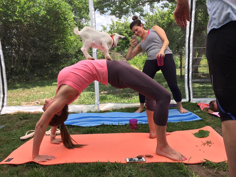 yoga-cabra-ejercicio